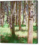 Lost In The Woods - Kenosha Pass, Colorado Canvas Print