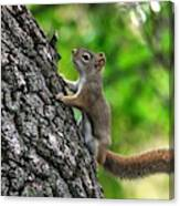 Lost Nuts Canvas Print