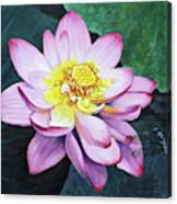 Lotus With Dragonfly Canvas Print