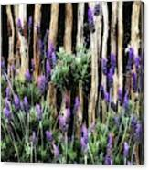 Love Of Lavender Canvas Print