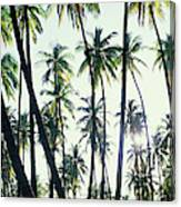 Low Angle View Of Coconut Palm Trees Canvas Print