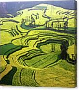 Luoping Rape Flower Fields Canvas Print