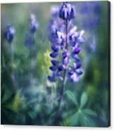 Lupine Blues Canvas Print