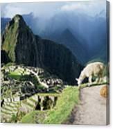 Machu Picchu And Llamas Canvas Print