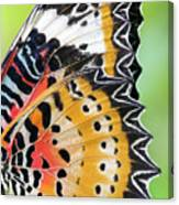Macro Close Up Of An Monarch Butterfly Canvas Print