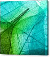 Macro Leaves Background Texture Canvas Print