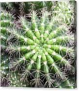 Macro Of Succulent Plant In The Desert Canvas Print