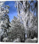 Magnolia Plantation In Grey Canvas Print
