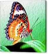 Malay Lacewing Butterfly II Canvas Print
