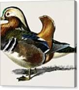 Mandarin Duck  Aix Galericulata Illustrated By Charles Dessalines D' Orbigny  1806-1876 1 Canvas Print