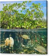 Mangrove Above And Below Water Surface Canvas Print
