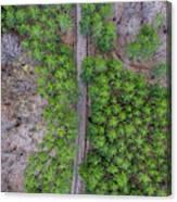 Manistee Pines Panorama Canvas Print