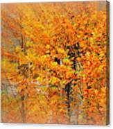 Maple Focal Zoom Canvas Print