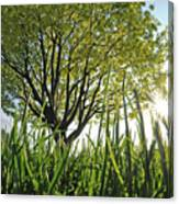 Marine Park Spring Sunshine Canvas Print