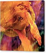 Marmalade Bloom Canvas Print