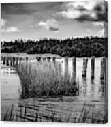 Mccormack's Beach Provincial Park, Black And White Canvas Print