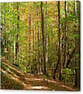 Meigs Creek Trailhead In Smoky Mountains National Park Canvas Print