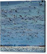 Migration Of The Snow Geese Canvas Print