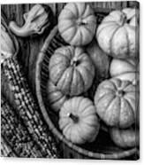 Mimi Pumpkins In Wicker Bowl Black And White Canvas Print