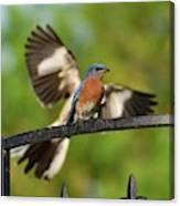 Mocking Bluebird Photo Bomb Canvas Print