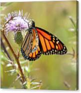 Monarch Butterfly On Thistle 2 Canvas Print