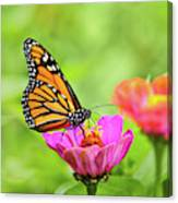 Monarch Butterfly Square Canvas Print