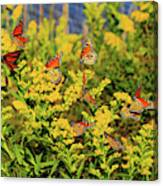 Monarch Gathering 1 Canvas Print