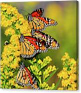 Monarch Gathering 2 Canvas Print