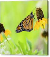 Monarch On Wildflowers Canvas Print