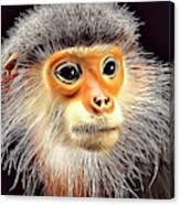Monkey 2 Canvas Print