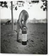 Monkey Inspecting Wine Bottle Canvas Print