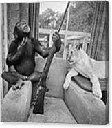 Monkeying About Canvas Print