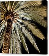 Moon Through Palm Tree Canvas Print