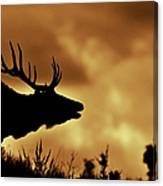 Moose At Sunrise Canvas Print