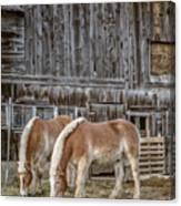 Horses By The Barn Sugarbush Farm Canvas Print