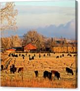 Morning Farm Scene Canvas Print