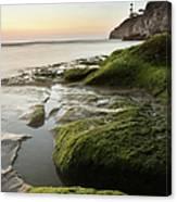 Mossy Rocks At Pismo Beach Canvas Print