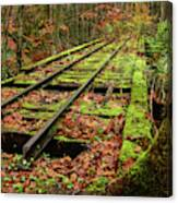 Mossy Train Track In Fall Canvas Print