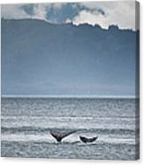 Mother And Calf Whale Tails Megaptera Canvas Print