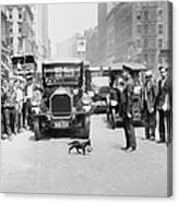 Mother Cat Blackie Halts Traffic As She Canvas Print