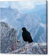Mountain Jackdaw Canvas Print