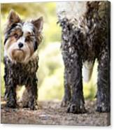Muddy Little Dog Stands Next To A Muddy Canvas Print