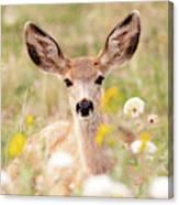 Mule Deer Fawn Lying In Wildflowers Canvas Print