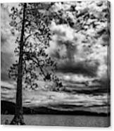 My Favorite Tree Black And White Canvas Print