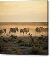 Namibia, Etosha National Park, Herd Canvas Print