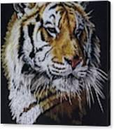 Nanook the Tiger Canvas Print