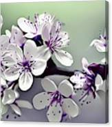Naturalness And Flowers 33 Canvas Print