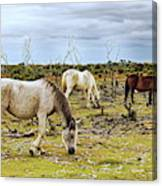New Forest Ponies On The Heath Canvas Print