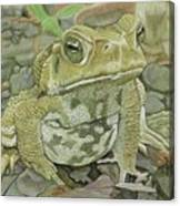 Noble Toad Canvas Print