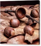 Oak Tree Macro Canvas Print
